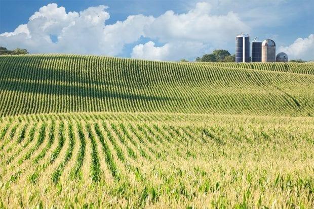 Iowa Corn Farm For Sale