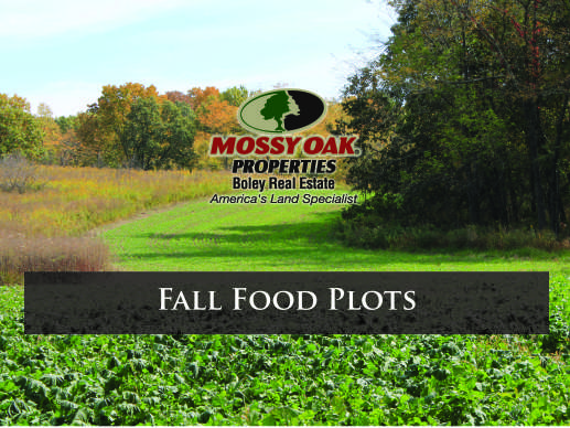 Fall Food Plots