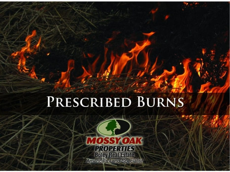 INCREASING VEGETATION THROUGH PRESCRIBED BURNS
