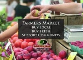 Local Farmers Market Information
