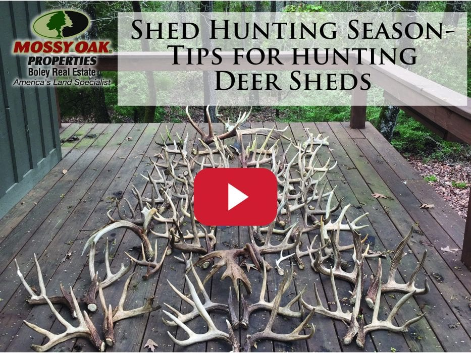Shed Hunting Tips