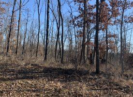 230 m/l hunting  land in Van Buren County, Iowa