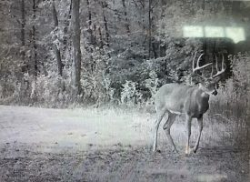 +/- 114 Acres for sale Davis County Iowa