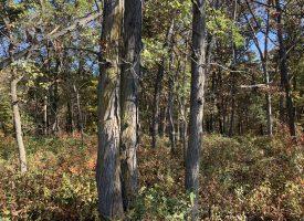 55 +/- acres of Incredible Hunting in Van Buren County, IA