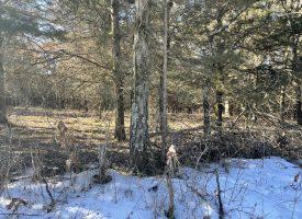 520 acres m/l, Incredible Hunting Property Van Buren County, IA