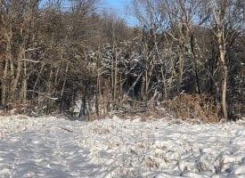 61.21 Acres Excellent Hunting Property for sale in Van Buren County, Iowa